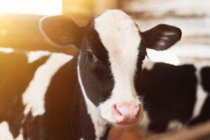 veganismo ventajas y desventajas